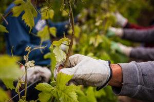 Wein Toskana - TABBERT blog